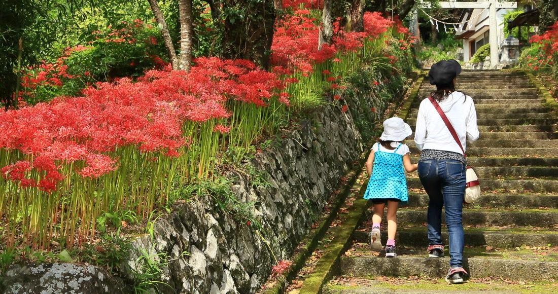 小泉熊野神社(曼珠沙華)-2
