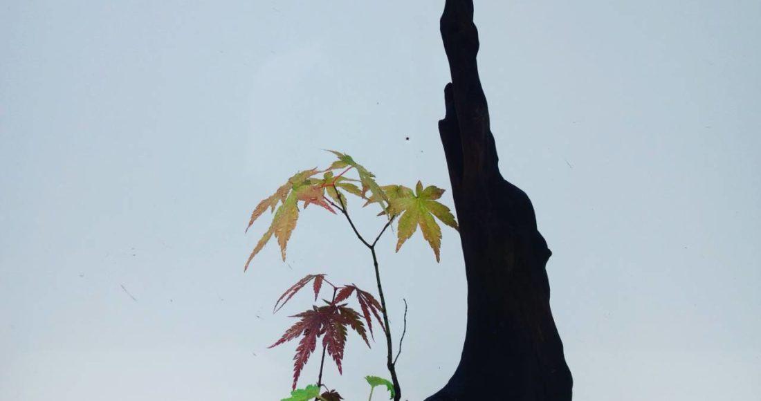 日和田工房盆栽③