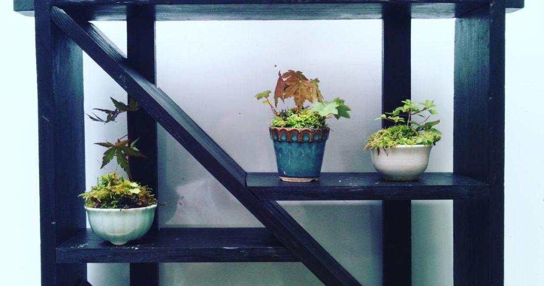 日和田工房盆栽①